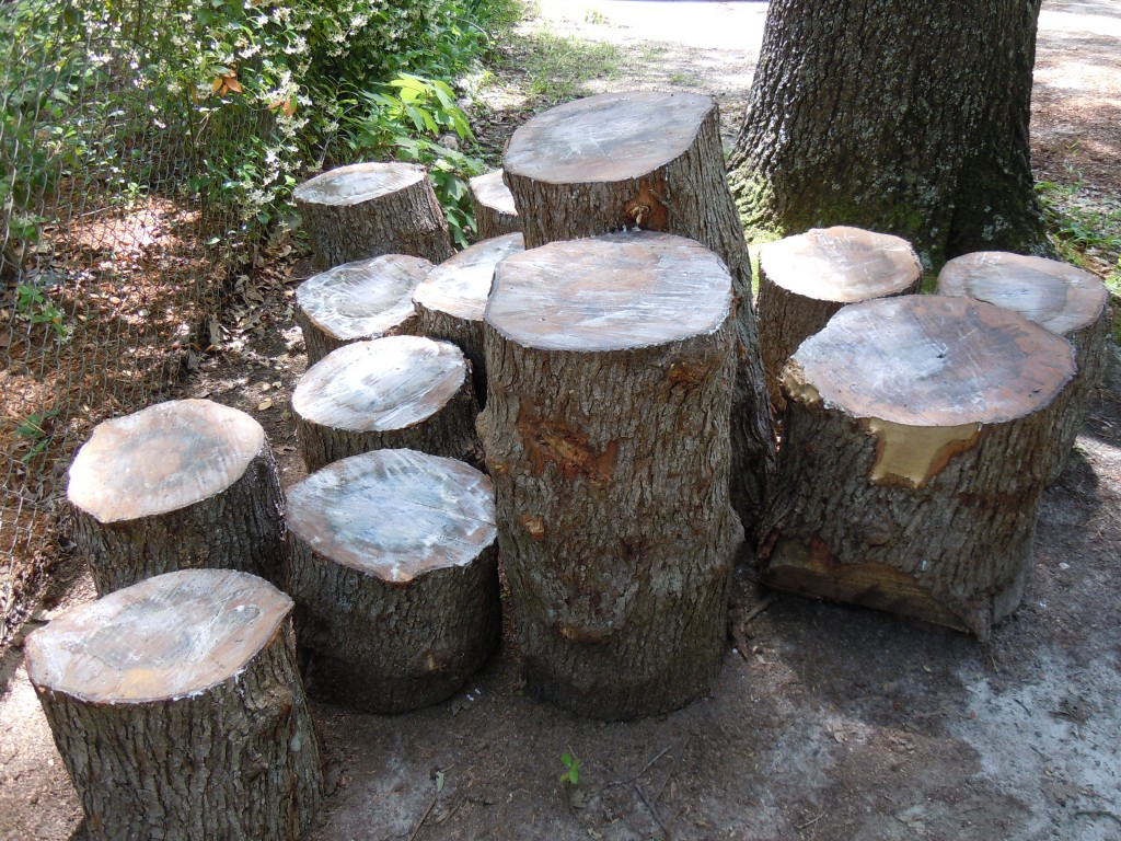 Duke Forest Ambrosia Maple